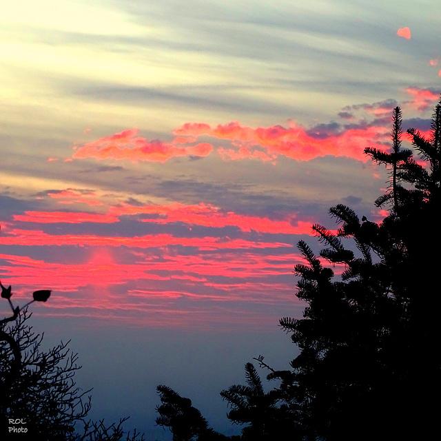 Sapins...! au lever du soleil..!