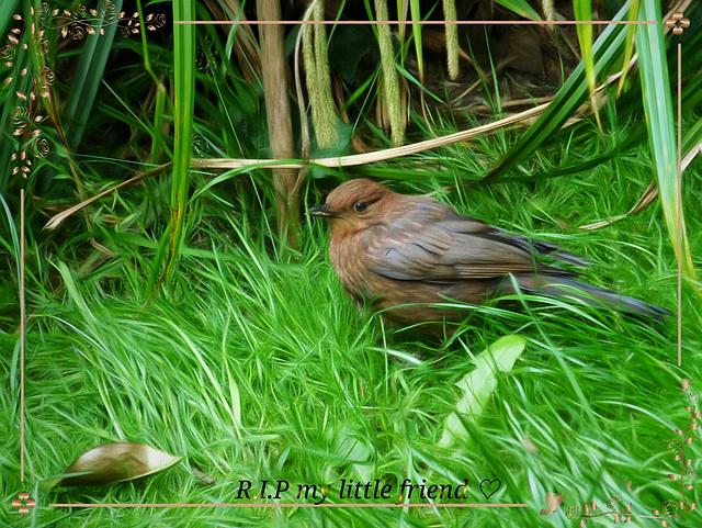 Birdie ❤