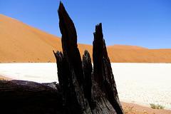 Blackwood Desert