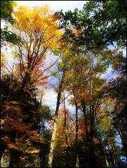 Une si belle journée d'automne [ON EXPLORE]