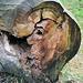 Baum mit Donald T. Frisur -Trump trunk