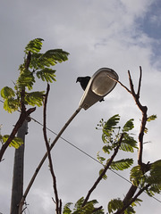 Electric number 10 eagle on street lamp