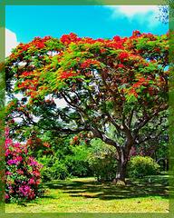 Mauritius (158)