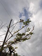 Electric eagle on street lamp / águila eléctrica en farola