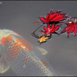 On the autumn pond