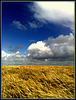 Barleyfield, North Cliffs, Cornwall
