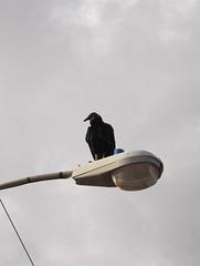 Aigle électrique sur lampadaire numéro 10