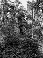 B&W in Binton Woods