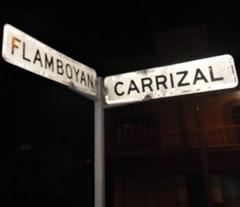 Flamboyan y Carrizal