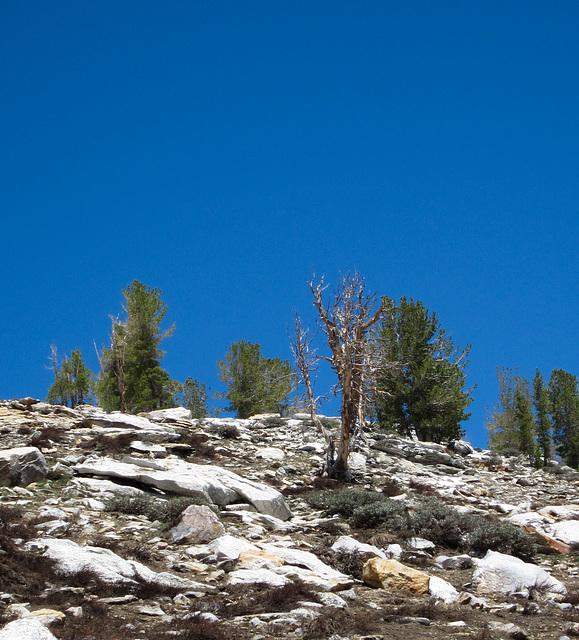 Island Lake Trail, Lamoille Canyon (0657)