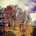 ..colori d'autunno..