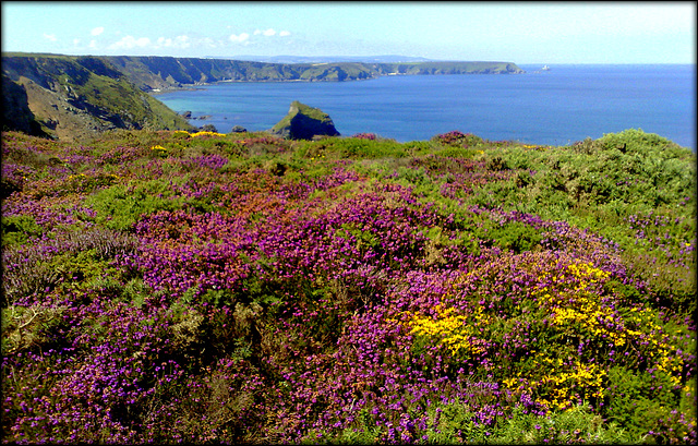 North Cliffs, above Porthcadjack on the way to Basset Cove, Cornwall