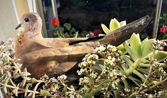 bird sitting in flower pot