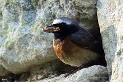 Dernier gavage avant de prendre congés du nid