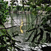 Reflet doré sur la Seine