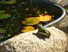 Happy Frog Friday !
