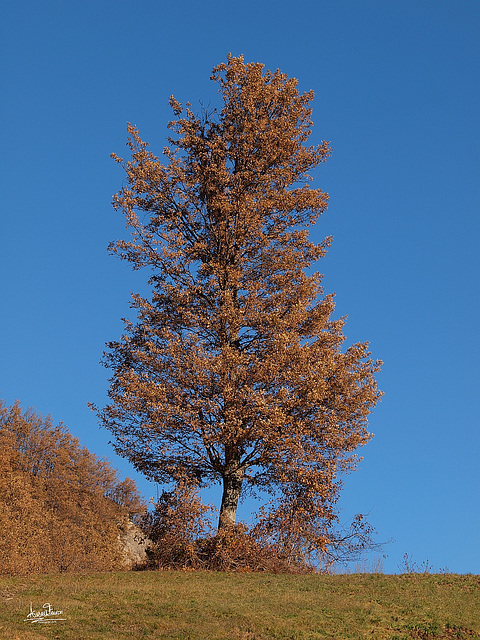 Autunno in Val Parma - Autumn in parmesan apennines