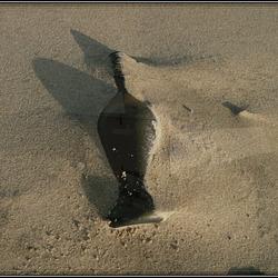 Was man am so alles Strand sieht... :-)