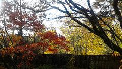 fall fence - backyard
