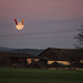 Februar - der Mond ist aufgehangen