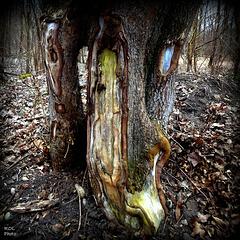 Nature ART..., le vieux couple