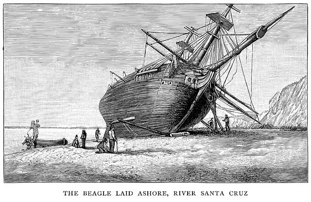 Beagle Laid Ashore & Snarked
