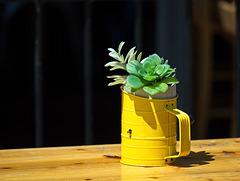 A Jug of Cactus