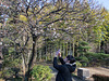 Ume blooming