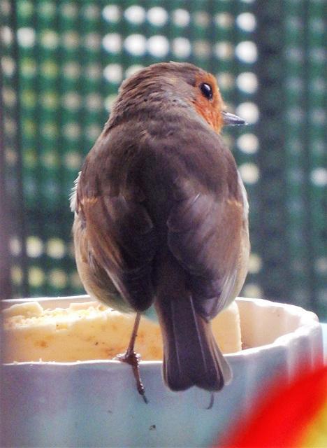 Robin,,