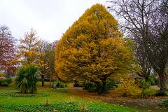 Autumn in Stafford