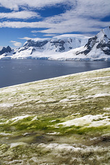 Green Antarctica (PiP)