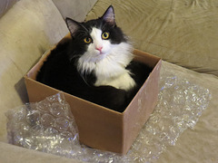 Another Day, Another Box
