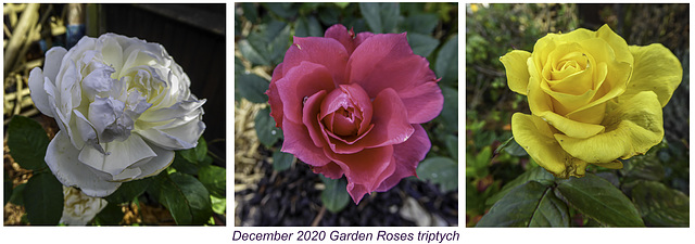 December Roses Triptych