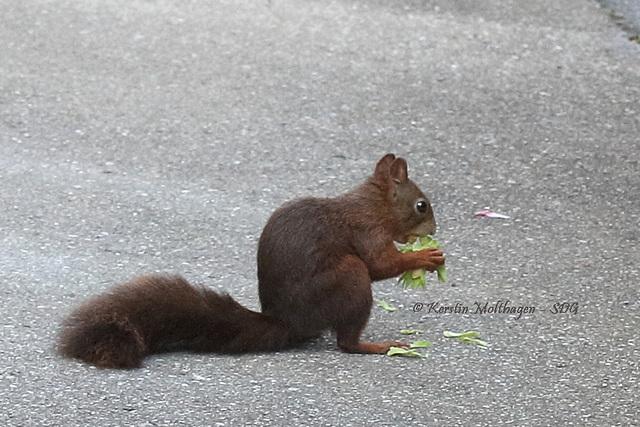 Explored - Mampfendes Eichhörnchen
