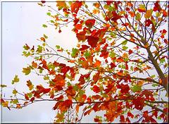 Aquarelle d'automne [ON EXPLORE]