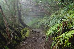 Im Nebel des Waldes