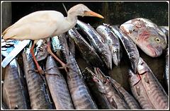 Victoria : al market un airone passeggia sui pesci....