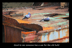 Pigeons on the old hulk - Newhaven - 12.9.2014