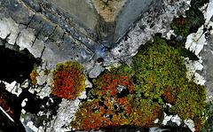 Lichen the Rot