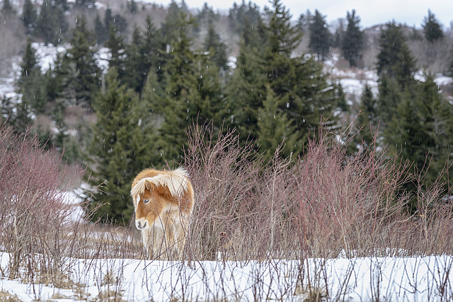 A Grayson foal
