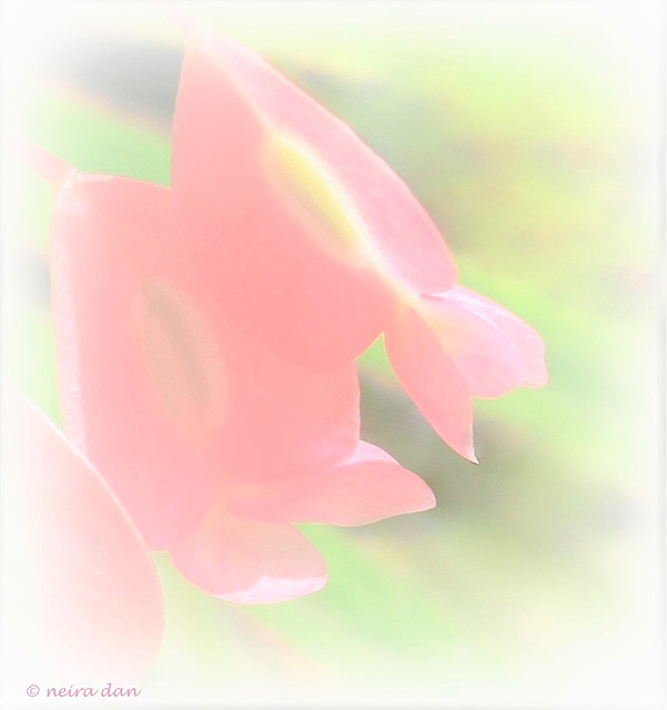 Softly , in green and pink
