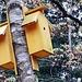 Bird houses in Hisingspark