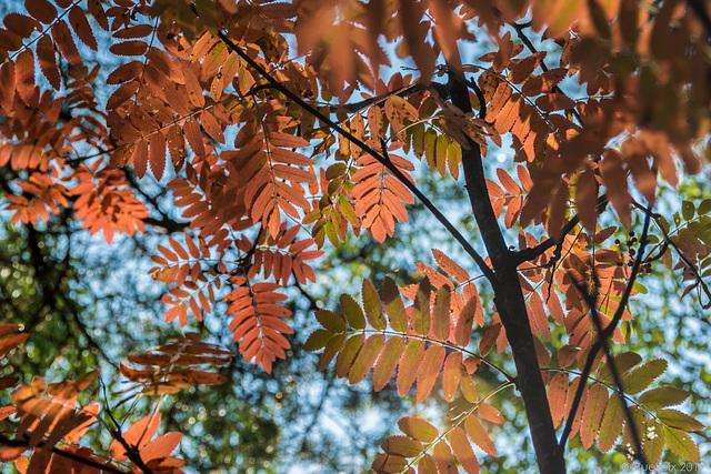 der Herbst kündigt sich an ...  (© Buelipix)