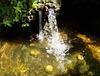 Le murmure de l'eau