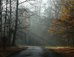 météo du jour dans l' oise : froid et brouillard .