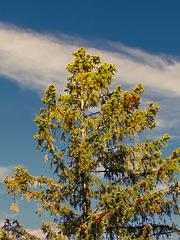 1 (23)...baum tree austria