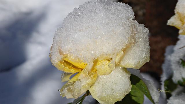 Wintereinbruch [2]