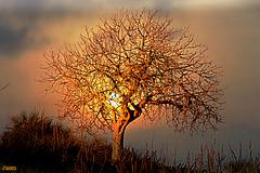 Tout rayonne de la beauté naturelle.