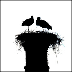 The Storks of Silves.