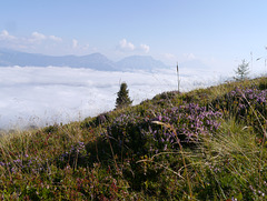 Wolkenmeer II   /   Sea of clouds II
